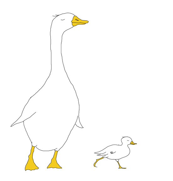 kindvall_ducks