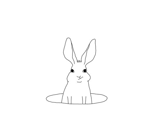 kindvall_rabbit